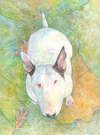 """So Where's My Cookie? ""...Yuki - a Bull Terrier dog print by Roberta Laidman"