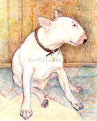 """Lovely Percy - a Bull Terrier"" - a Laidman Dog Print"