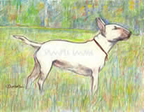 Bull Terrier in Meadow - a Laidman Dog Print